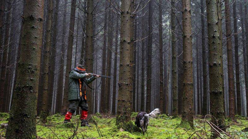 Les plans de chasse doivent faire en sorte que la population d'ongulés permette une régénération naturelle et diversifiée des forêts. (Illustration)