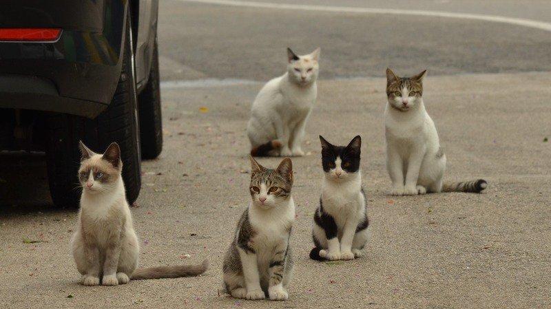 Le trappage puis la stérilisation des chats errants durant le mois d'août divise.