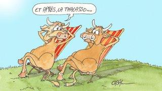 Bio Suisse: des massages qui rendent les vaches heureuses