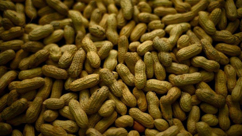 La consommation de deux portions de cacahuètes par semaine est liée à une baisse de 13% du risque de maladie cardiovasculaire et de 15% de pathologie coronaire.