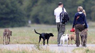 Zurich: les propriétaires de grands chiens ne devront plus suivre de cours obligatoires