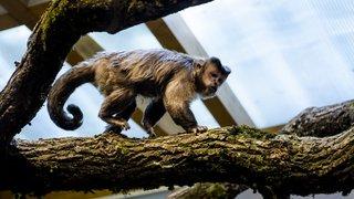 Un nouveau bâtiment pour les singes de Servion