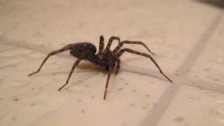 Il met le feu à son appartement en voulant tuer une araignée