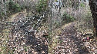 Intempéries dans le Chablais: une opération de nettoyage des sentiers forestiers lancée sur Facebook cartonne