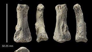 Archéologie: un os d'Homo sapiens, vieux de 85'000 ans, trouvé hors d'Afrique