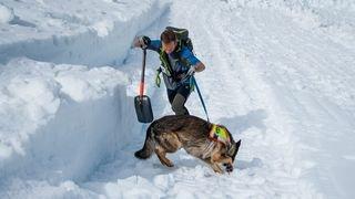 Champéry: les chiens d'avalanche à l'honneur lors du 32ème Mémorial Godard-Bionaz-Pralong