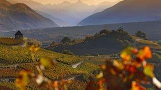 Premier Grand Cru de Suisse, celui de Salquenen fête ses 30 ans