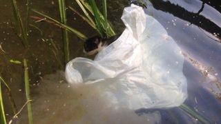 Huit chatons jetés vivants dans une rivière à Vétroz