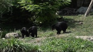 Canicule: de la glace pour les ours du zoo de Zurich