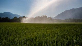 A la découverte des rizières du Tessin