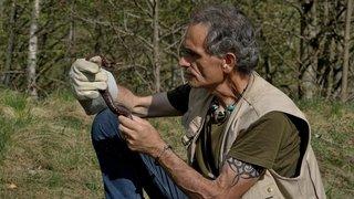Magazine «Terroirs»: «ne touchez jamais un serpent sauvage!»