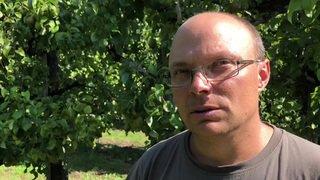 Valais: Comment se débarrasse-t-on de la cochenille farineuse? Réponse d'Olivier Comby, arboriculteur à Saxon