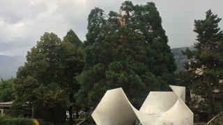 Un arbre transpercé par la foudre à Sion