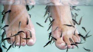 Thaïlande: une touriste se fait amputer des orteils après une séance de fish spa