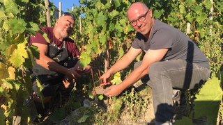 Cépage ancestral du Valais, la diolle se voit offrir une belle renaissance à Chamoson