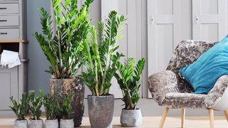 Choisissez des plantes dépolluantes