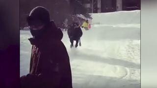 Etats-Unis: un élan sème la panique en chargeant des skieurs sur une piste