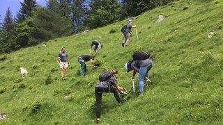 Pour marquer ses 100 ans, le CAS Martigny convie les jeunes à soutenir les agriculteurs de montagne