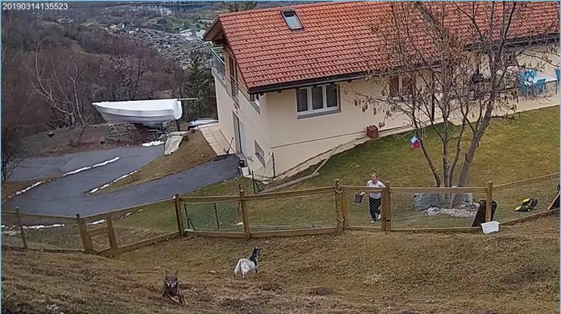 Faut-il avoir peur du loup proche des maisons?