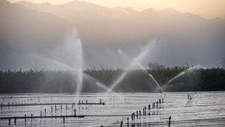 Politique agricole 2022+: le Valais réclame une assurance récolte