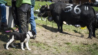 20190414_vaches_GM_28074