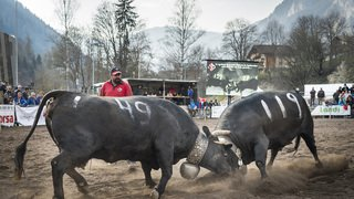 20190414_vaches_GM_28261