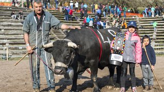 20190414_vaches_GM_28311