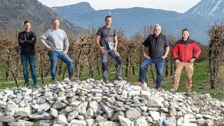 Valais: des hermines au secours des cultures fruitières, une première suisse