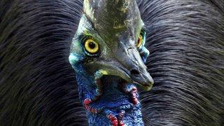 Etats-Unis: un casoar, grand oiseau tueur d'homme, mis aux enchères en Floride