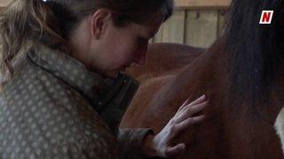 Ces métiers insolites pour nos animaux: Stéphanie l'ostéopathe pour animaux