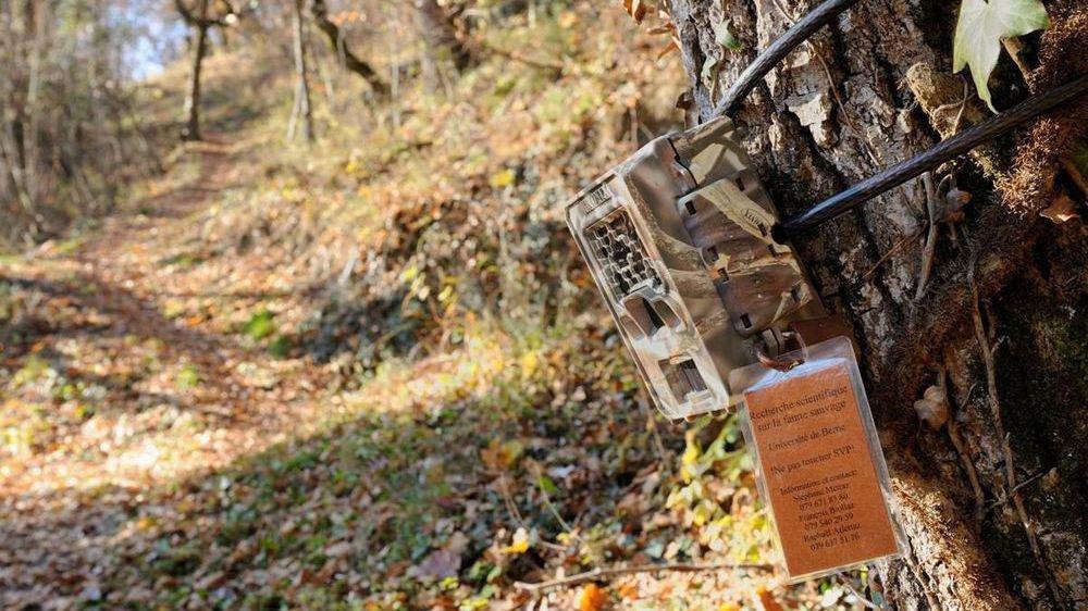 L'un des pièges photographiques installés par l'Université de Berne afin de cartographier les traces d'animaux.