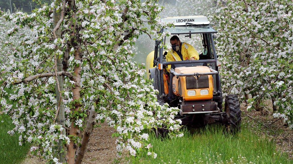 Dans l'arboriculture et la viticulture notamment, le Valais ne respecte pas toujours les lois en matière de pesticides.