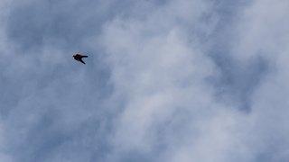Un wingsuiter valaisan de 43 ans perd la vie vers la cabane de la Tourche (VD)