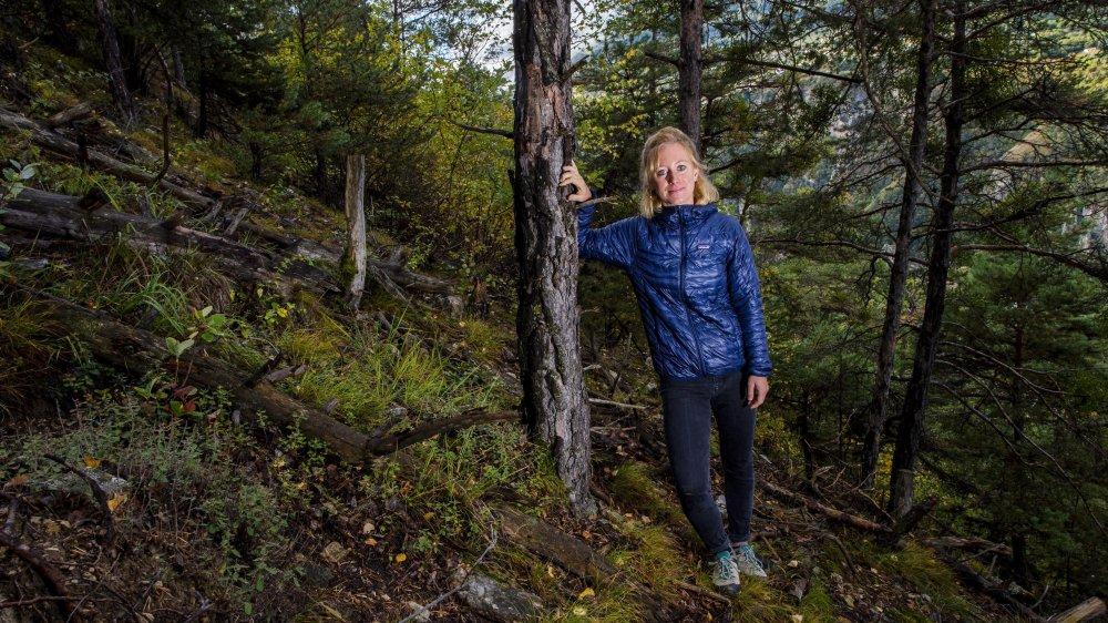 Face au réchauffement, la forêt valaisanne se transforme et s'élève