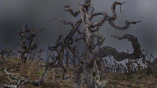 Le bourg de Saillon célèbre la vigne par l'image