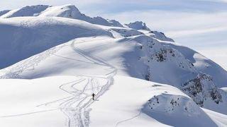 Le WWF Valais demande aux autorités d'interdire le trophée du Saint-Bernard